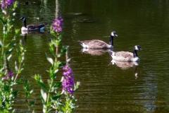 Photos taken in Berlin Park, Berlin, N.J., July 31, 2017  Camden County Photo by David M Warren