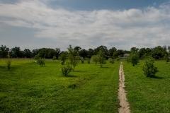 Von-Nieda-Park-15