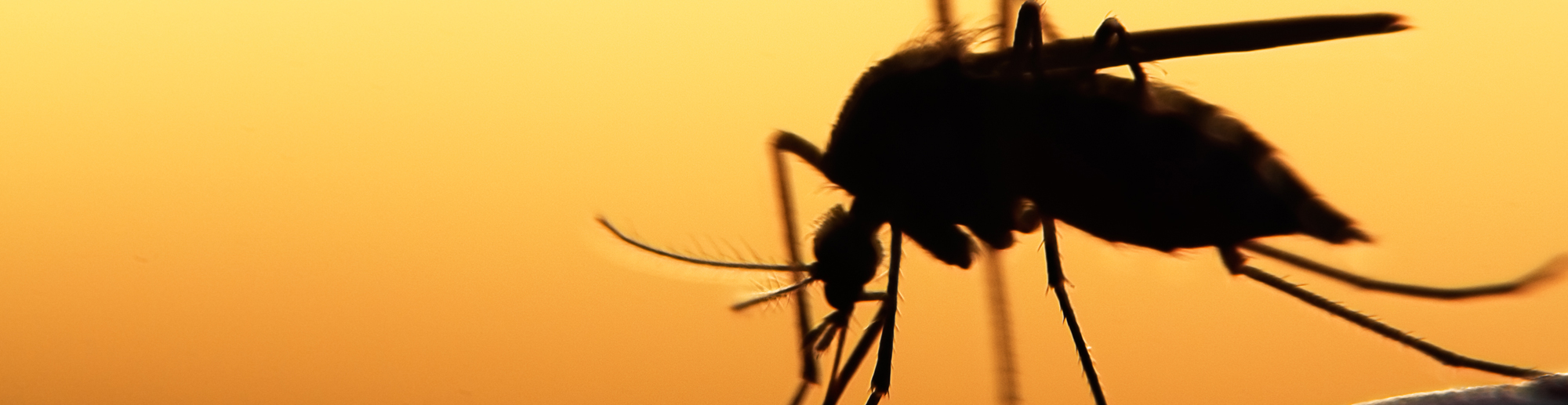 Mosquito Spraying Schedule